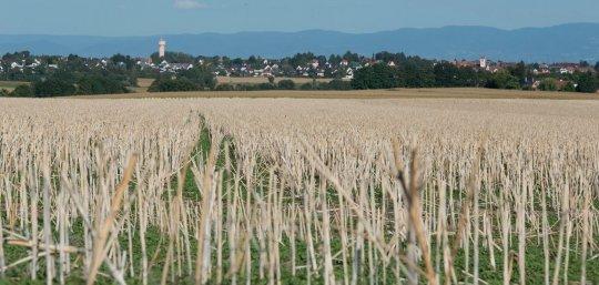 Balade ludique de Truchtersheim